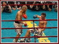 Cotto Malignaggi1 Ringside Boxing Report: Miguel Cotto   Paulie Malignaggi